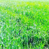 5 Acre Land Sell In Orchha Near Of River Bank