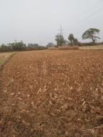 Sale Single Land