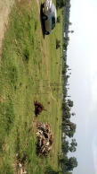 Land For Sale In Pollachi